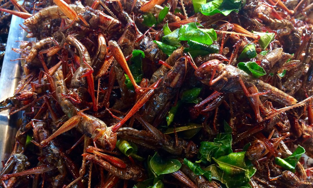 Fried Grasshopper Salad